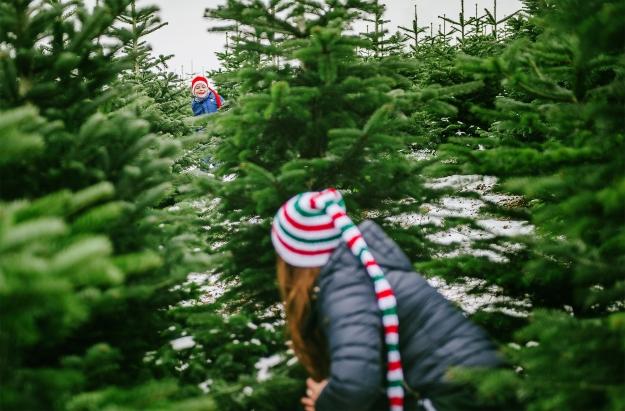 Treefa17-12-Kopie